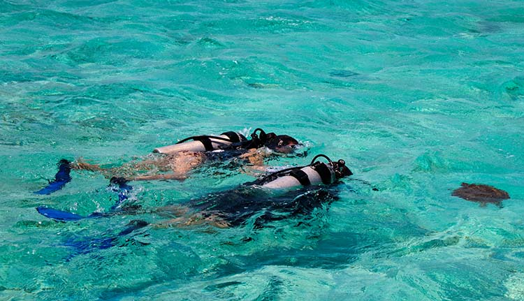 Scuba diving and snorkeling exclusive